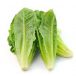 Cos Lettuce on White Background — Stock Photo #37886731