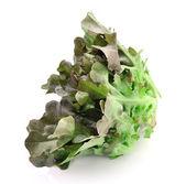 świeże sałaty zielonej liście na białym tle — Zdjęcie stockowe