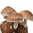 Mushroom isolated on white background — Stock Photo