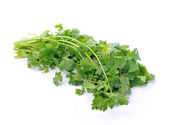 Coriander on white background — Stock Photo