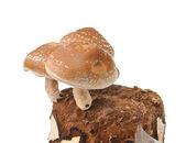 Mushroom bag on white background — Stock Photo