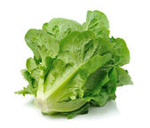 Cos lettuce — Stock Photo