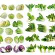 Stock Photo: Bok choy , cabbage