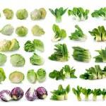 Bok choy , cabbage — Stock Photo