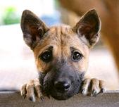 Puppy dog — Stock Photo