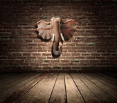 Room interior vintage with brown textured wall and Elephant head — Stock Photo