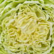 Slice of fresh chinese cabbage. Isolated on a white background — Stock Photo #48422081
