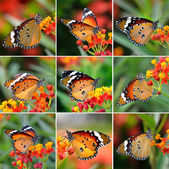 Butterfly on orange flower — Stock Photo