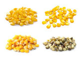 Sweet whole kernel corn on white background — Stock Photo