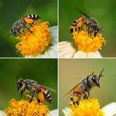 Close up  bees on  flower — Stock Photo