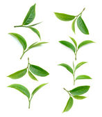 Tea leaf isolated on white background — Stock Photo