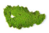 Green moss isolated on white bakground — Stock Photo