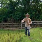 Farmer pouring  fertilize — Stock Photo #51380009