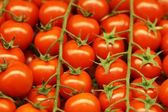 Red tomatoes for salad — Stock Photo