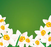 Daffodils on green background. — Vecteur