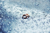 Gold wedding rings between drops — Stock Photo
