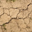 Dry cracked brown earth — Stock Photo