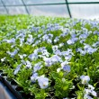 Plant green house garden flower nursery — Stock Photo