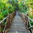 Stock Photo: Wooden Bridge In Mangrove Forest