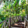 Stock Photo: Wooden Stairway in the jungle