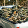 Pineapple on the truck — Stock Photo
