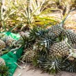 Pineapple farm — Stock Photo #37999189