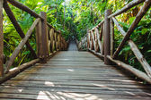 Wood path through tropical forest — Foto de Stock
