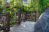 Wood path through tropical forest — Stock Photo
