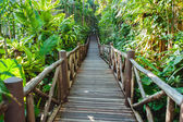 Wooden Bridge In Mangrove Forest — Foto Stock