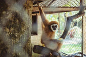 Monkey sitting in a cage zoo — Stock Photo