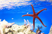 Tropical reef — Stock Photo