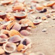 Seashells on the beach sand on a summer day — Stock Photo