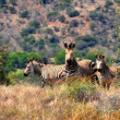 SOUTH AFRICA — Stock Photo #28784049