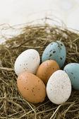 巢的复活节彩蛋 — 图库照片