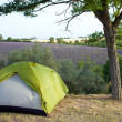Camping tent by lavender fields — Stock Photo #44789091