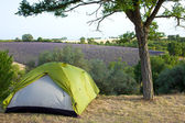 Camping tent by lavender fields — Stock Photo