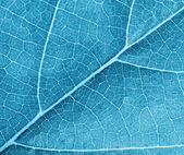 Blue leave texture — Stock Photo