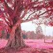 Stock Photo: Swing on tree, pink imagine forest