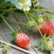 Group strawberry in garden — Stock Photo #32435361