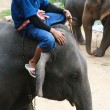 A mahout ride elephant, Chiang Mai, Thailand — Stock Photo #32436957