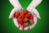 Red strawberry in two hand — Stock Photo