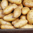 Stock Photo: Harvest potato