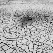 Cracked soil in river  — Stock Photo