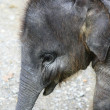 Elephant, baby — Stock Photo #32444997