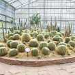 Big cactus garden on sand ground,conservatory — Stock Photo