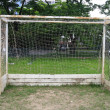 Old soccer goal in field — Stock Photo