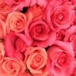 Stock Photo: Rose background