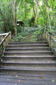 Wood walkway and step in Thailand forest — Stock Photo