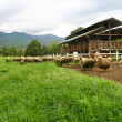 Sheep farm and barn — Stock Photo