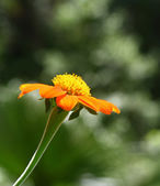 Orange flower — Stock fotografie